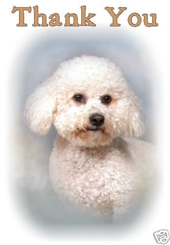 No 1 Bichon Frise Thank You Card By Starprint Auto combined postage