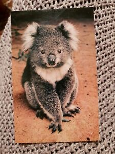 The-Australian-Koala-Vintage-Postcard