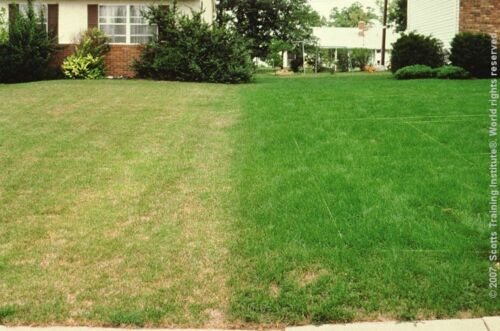 2kg DROUGHT RESISTANT LAWN SEED with KENTUCKY BLUEGRASS Grass For Dry Soil