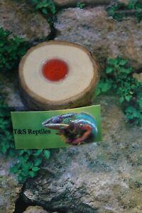 Forest-Jelly-Pot-Holder-Wooden-Reptile-Bird-Insect-Vivarium-Feeding-Decor