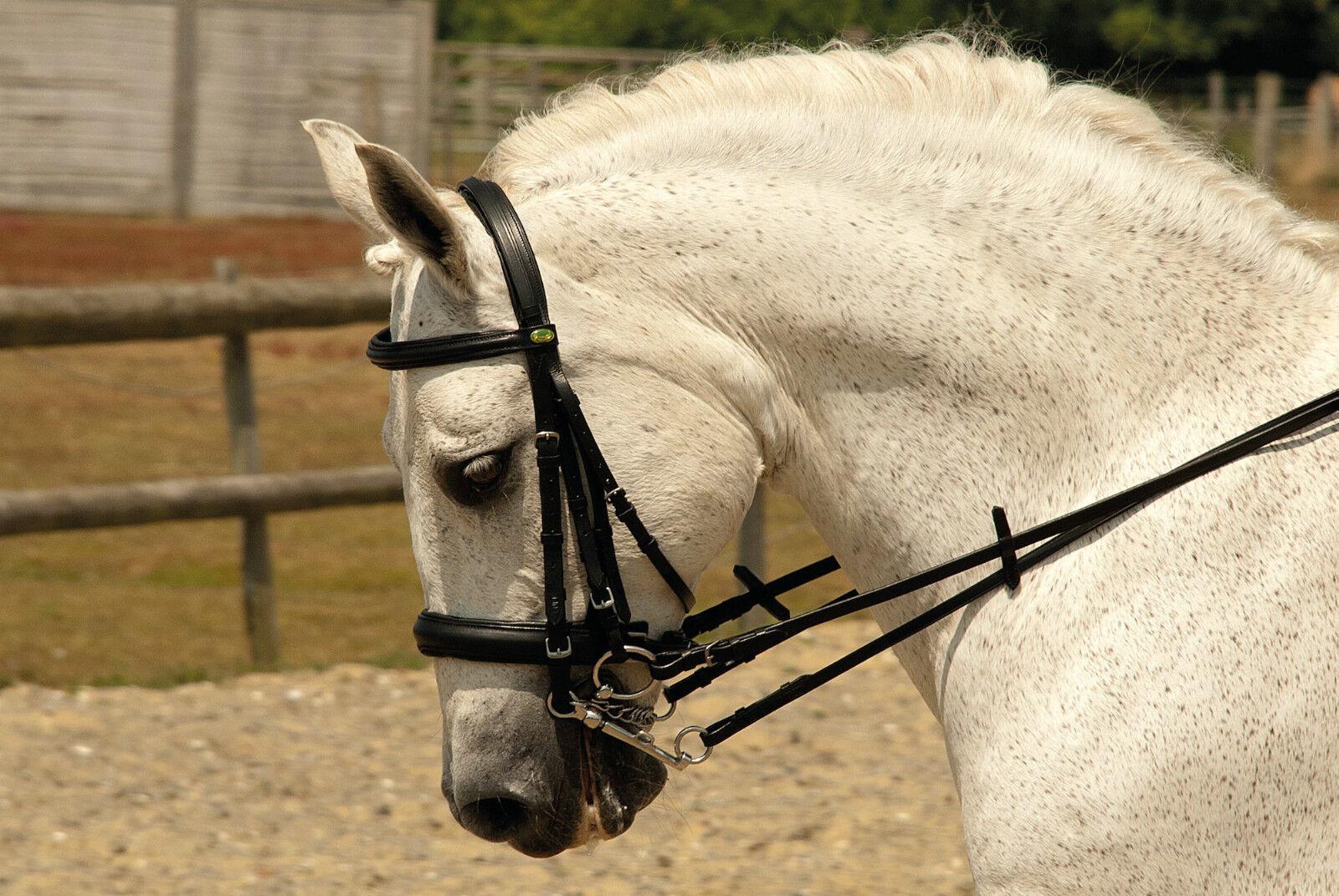 SALE Rhinegold German Leder Comfort Double Horse Bridle inc.Reins PONY BLK