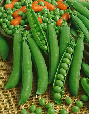 ORGANIC VEGETABLES PEA PROGRESS NO 9  250 SEEDS