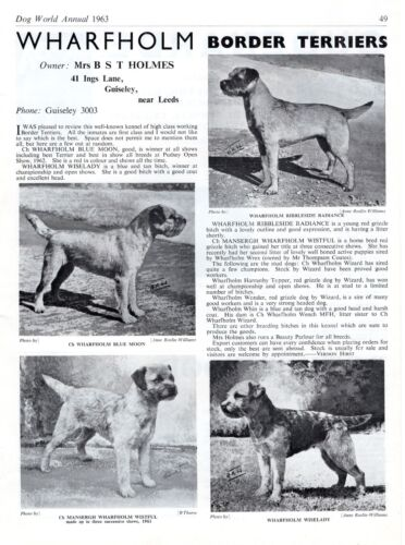 BORDER TERRIER DOG WORLD 1963 BREED KENNEL ADVERT PRINT PAGE  WHARFHOLM KENNELS