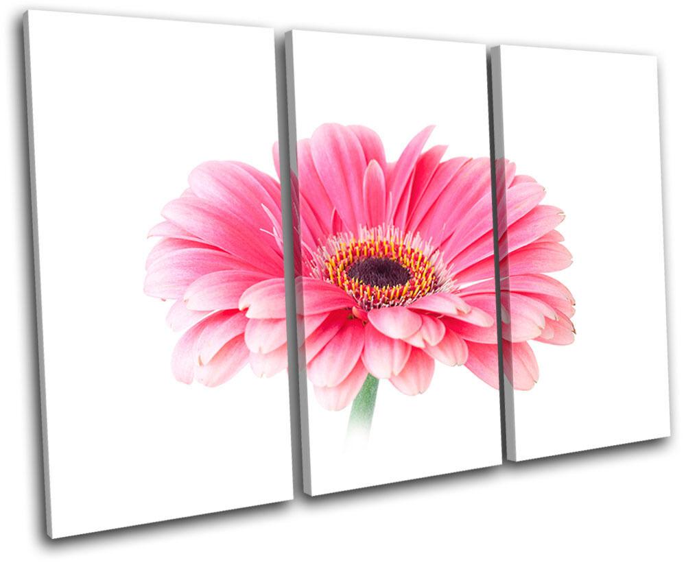 Gerbera Gerbera Gerbera Flowers Floral TREBLE TELA parete arte foto stampa a01761