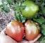 Dwarf-Purple-Heart-Tomato-10-Seeds
