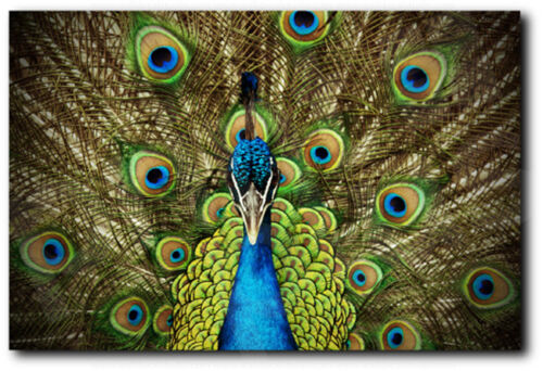 Peacock Peafowl Open Tail Art Canvas Poster Print Home Wall Decor