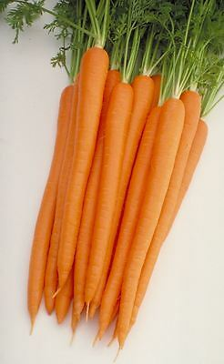 Vegetable - Baby Carrot - Sugarsnax 54 F1 - 150 Seeds - Economy