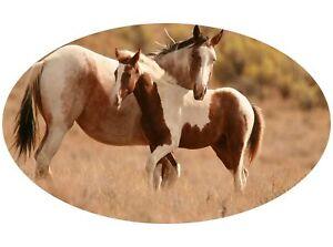 Motor-home-Caravan-Camper-Horse-box-Horses-Sticker-Mural-Decal-Graphic-mh1-32