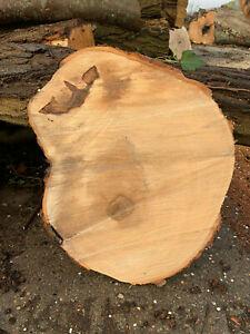 Robinie 3x Baumscheibe Holzscheibe 30x3 cm