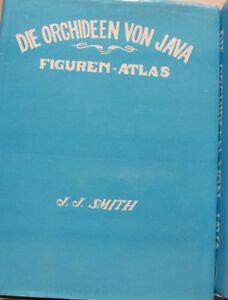 Die-Orchideen-von-Java-Figuren-Altas-Reprint-von-1984-mit-vielen-Abbildunge