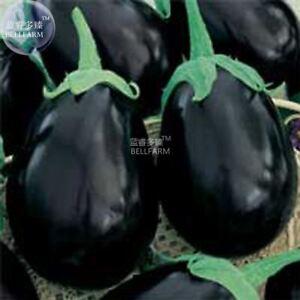 Eggplant-Black-Big-Vegetables-Seeds-100-seeds-organic-tasty-for-home-garden