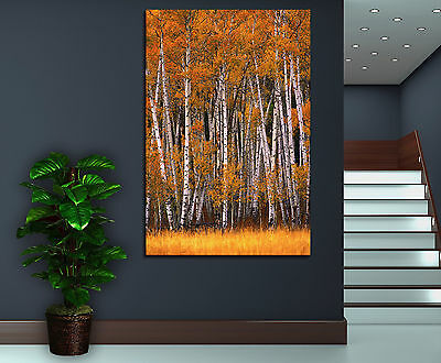 Canvas Giclee Home Prints Fine Art Birch Tree Trees Photo Print Colorful