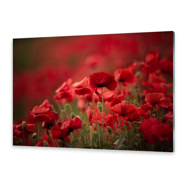 Vetro acrilico immagini Muro Immagine da plexiglas ® immagine Papavero Fiori