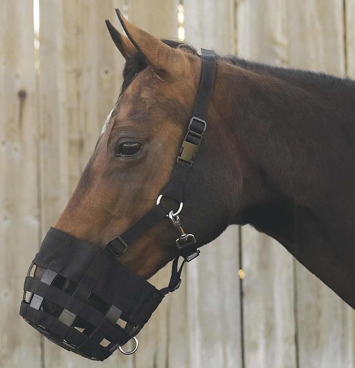 Intrepid International Padded Best Friend Padded International Leder Crown Grazing Muzzle Horse 694533