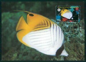 Dynamique Micronesia Mk 1997 Faune Poisson Tropical Fish Pesce Brais Maximum Carte Mc En36-afficher Le Titre D'origine êTre Nouveau Dans La Conception