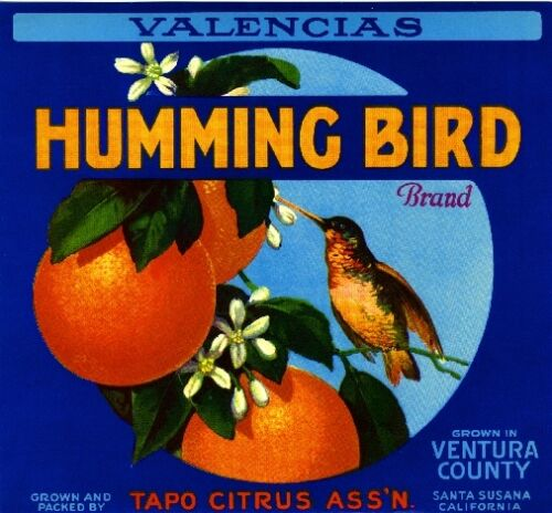 Santa Susana Humming Bird #1 Orange Citrus Fruit Crate Label Art Print