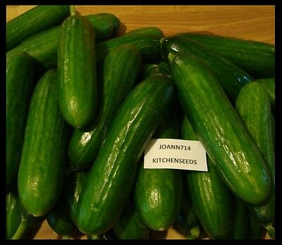 (20) Hybrid seeds Persian Cucumber,Lebanese, bitter free, burpless and seedless