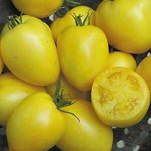 Befugnisse Erbstück Tomate 20 Samen Mond Gärten einfach Grown wunderschön