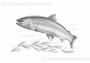 BROWN TROUT Game Pencil Drawing Fishing Art Print Fly Angler Fisherman Gift