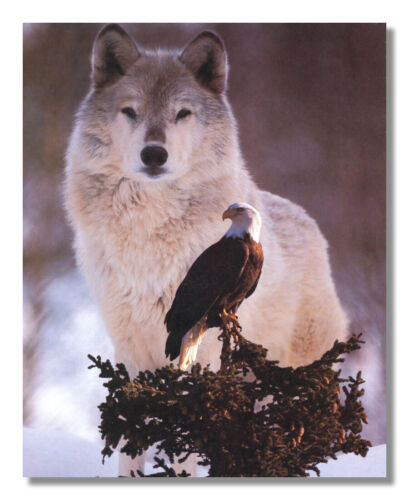 American Bald Eagle Bird with Gray Wolf Photo Wall Picture 8x10 Art Print