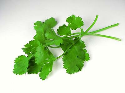 italian parsley vs cilantro