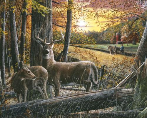 Autumn Harvest by Kevin Daniel Deer Buck Doe Poster 37x29.5 WILDLIFE ART PRINT