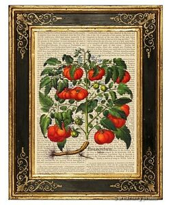 Heirloom-Tomatoes-Art-Print-on-Vintage-Book-Page-Garden-Home-Kitchen-Decor-Gifts