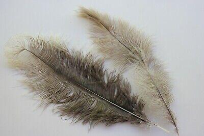 Twenty five yellow ostrich blondene feather first grade 350-400MM 25