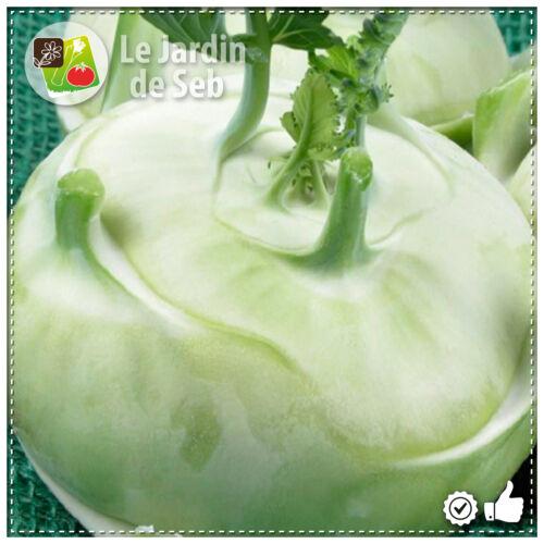 SEB-0069 100 Graines de Chou-rave blanc hâtif de Vienne