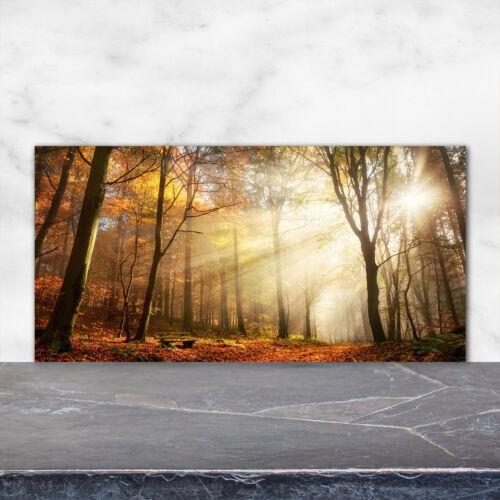 Küchenrückwand Spritzschutz aus Glas 120x60 Deko Landschaften Nebel im Wald