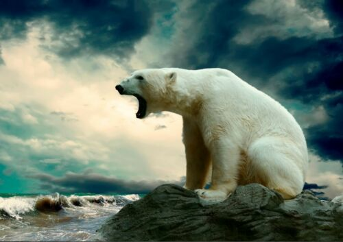 Polar Bear Roaring Animal Nature Snow Winter Arctic Circle Wild Predator Poster