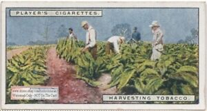 Harvesting-Tobacco-Plants-In-The-Field-90-Y-O-Trade-Ad-Card