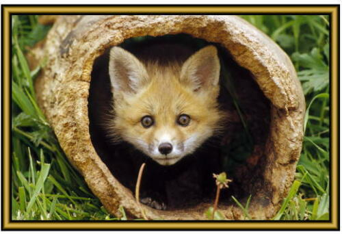 . Fox Photographs New Fridge magnets