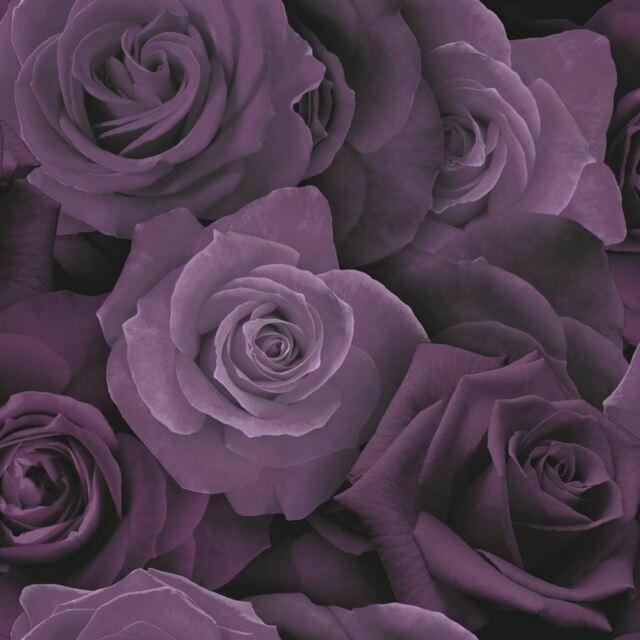Arthouse 675601 Austin Rose Flower Wallpaper Purple For Sale Online Ebay