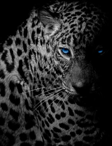 Home Dcor Tempered Glass Photo Print Wall Art Picture B&W Panther ...