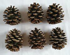 Lot of 6 Medium 3-4 inch Pinecones for decoration crafts etc