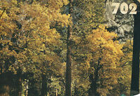 Scenic Wall Mural-autumn Trees
