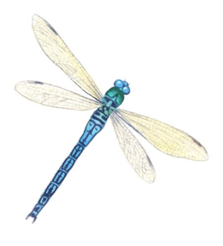 Dragonfly Dragonflies Blue Select-A-Size Waterslide Ceramic Decals Bx