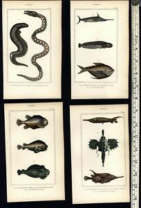 Tropical-rare-Fish-Poissons-c-1830-039-s-collection-8-fine-old-hand-colored-prints