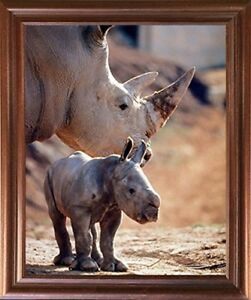 Mother-Rhinoceros-with-Her-Baby-White-Rhino-Animal-Wildlife-Wall-Framed-Picture