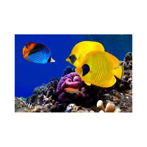Tropical fish poster poster 68832754 art deco stickers