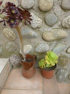 Importé De L'éTranger Lot 2pot S Plantes Artichauts+plantes Faciles Reprise 0ff+verveinedu Jardi Les Commandes Sont Les Bienvenues.