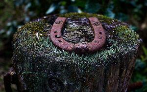 Enmarcado impresión Rusty viejo zapato de caballo clavado a un árbol Tocón (Imagen Caballo Art)