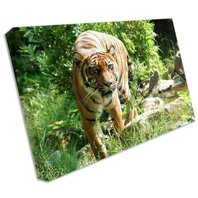 Tigre animale stampa su tela tela tela incorniciato FOTO MURO ARTISTICO anim144 3081b9