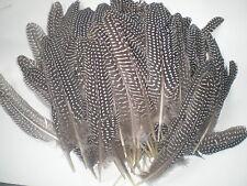 gros lot de 100 plumes pintade 18 cm