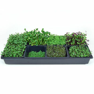 SECTIONAL HYDROPONIC MICROGREENS GROWING KIT - GROW INDOOR GARDEN MICRO GREENS
