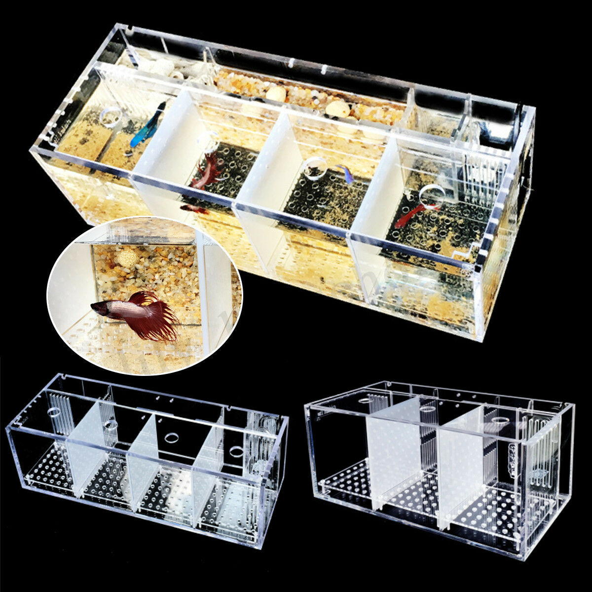 Aquarium Betta Fischzucht Baby Aufzucht Aquarien Brutkasten + Wasserpumpe