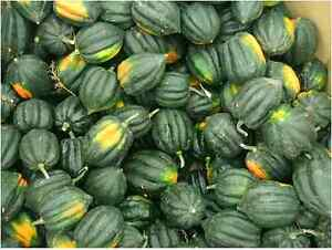 Details about Winter Squash,Table Queen Acorn - Organic,Heirloom 30 Seeds   2018