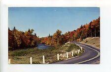 A view near Lewisburg PA (Union Co) street view, fall foliage, vintage postcard