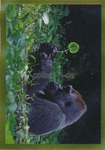PANINI National Geographic-il mondo in Colore Adesivo singola 138